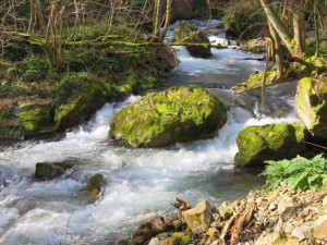 Pyrenees Mountain Stream