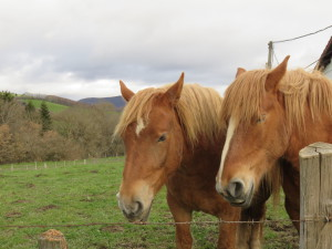 Basque Country horses