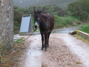 Donkey hanging out near El Acebo Albergue